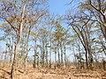 Habitat Tansa WLS by Dr. Raju Kasambe DSCN4979 (7).jpg