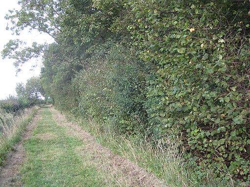 Hardwick Wood 8