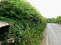Hartham Lane, Corsham - geograph.org.uk - 1942409.jpg