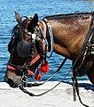 Head of carriage horse in Chania, Creta 07.jpg