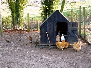 Chicken coop - A chicken coop or hen house