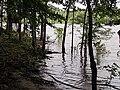 Hi Water Parkers Creek Jordan Lake NC SP 3758 (36009095591).jpg