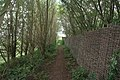 Hidden path to the Viking Hide - geograph.org.uk - 215759.jpg
