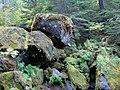 Hike into Watson Falls (3022328514).jpg