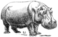 Hippopotamus (PSF).png