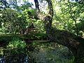 Hishigataike Pond and Mikumari Shrine in Usa Shrine.JPG