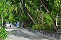 Hithadhoo Road side, The Island Nation - panoramio.jpg