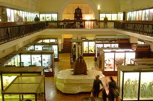 Interior main gallery in the Horniman Museum