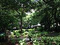 Hydrangea Garden of Hakozaki Shrine.JPG