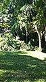 Iguape - SP - panoramio (292).jpg