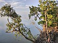 Images from Bali Island Sunderbans IMG 20171112 062525.jpg