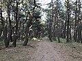 Imazu Pine Grove 15.jpg