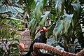 In the Aviary (32128413156).jpg