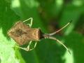 Insecto Bastavales Galicia 044b.jpg
