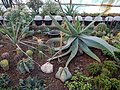 "Iran-qom-Cactus-The greenhouse of the thorn world گلخانه کاکتوس ""دنیای خار"" در روستای مبارک آباد قم- ایران 21.jpg"