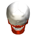 Irregular bones in skull - psoterior view.png