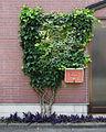 Ivy letterbox (14329362865).jpg