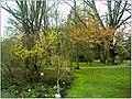 January Frost Botanic Garden Freiburg blühende China Zaubernuß - Master Botany Photography 2014 - panoramio (2).jpg