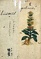 Japanese Herbal, 17th century Wellcome L0030078.jpg