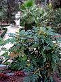 Jardín Botánico de Madrid en febrero- (16468283057).jpg