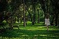 Jardim Botânico de SP - Floresta com pessoa.jpg