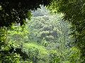 Jardin balata Martinique - panoramio (4).jpg