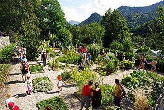 Aulps Abbey - The abbey's medicinal garden