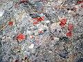 Jasper-quartz pebble conglomerate (Lorrain Formation, Paleoproterozoic, ~2.3 Ga; Ottertail Lake Northeast roadcut, near Bruce Mines, Ontario, Canada) 30 (47656302872).jpg