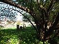 Jewish Cemetery in Starachowice 14.jpg