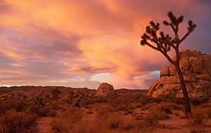 Joshua Tree NP - Sunrise.jpg