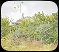 Jungle and abandoned equipment (3607563265).jpg