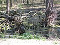 Jurapark, Solec Kujawski, Poland (www.juraparksolec.pl) - panoramio (32).jpg