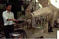 Kalyan Shankar Das Modelling Diplodocus - Dinosaurs Alive Exhibition - NCSM - Calcutta 1995 466.JPG