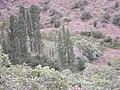 Karaboğaz - panoramio (2).jpg