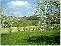 Kirschblüte - panoramio (22).jpg