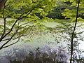 Kobe Municipal Arboretum in 2013-6-22 No,99.JPG
