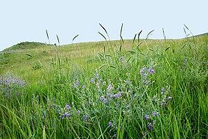 English: Konza Prairie 2005 photo by Edwin Ols...