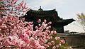 Korea Palace Spring Flowers 08.jpg
