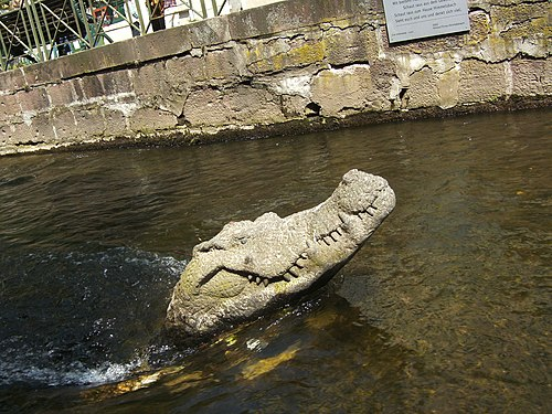 Krokodilo, Gewerbekanal Freiburg.JPG