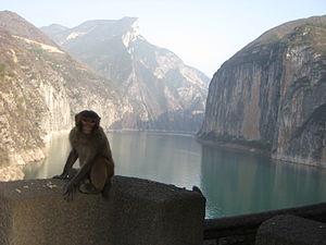 Simians (Chinese poetry) - Image: Kuimen monkey
