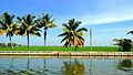 Kuttanad landscapes-WikiJalayatra-ViswaPrabha-16.JPG