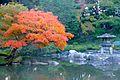 Kyufurukawagardens-fallfoilage-nov9-2012.jpg
