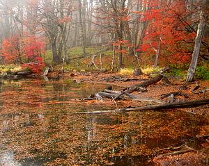 Climate of Argentina - Autumn in Bariloche