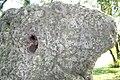 Löchriger Stein 11.jpg