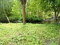 LSG WDPA-ID 320483 Grünanlage Rockenhof Volksdorf (4).jpg