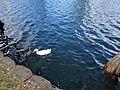 Lake Eola (30284572721).jpg