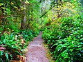 Lake Marie Trail in Umpqua Lighthouse State Park near Winchester Bay, Oregon.jpg