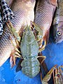 Lake Sevan trout and crawfish - panoramio.jpg