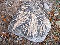 Lake Simcoe Retreat - Maryholme - Dec'10 (149) (5250024872).jpg