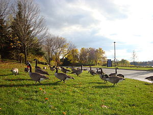 Lakeview, Mississauga - Lakefront Promenade Park